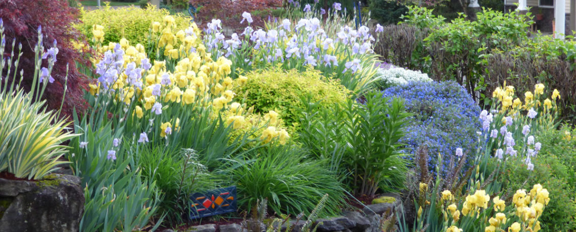 Capture The Beauty of Your Garden